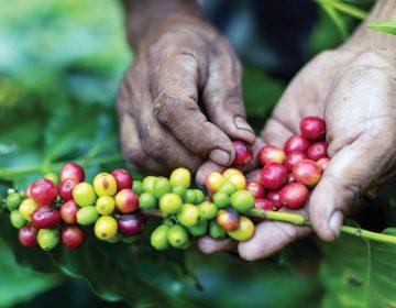 Comercio justo y otras formas de obtener alimentos