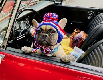 'En 2020, mi perro se convirtió en alcalde de Rabbit Hash, Kentucky'
