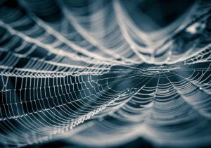Estas arañas macho atacan a las hembras y las atan antes de aparearse para evitar ser comidas