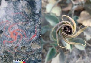 El consumo de alucinógenos inspiró la creación de pinturas rupestres