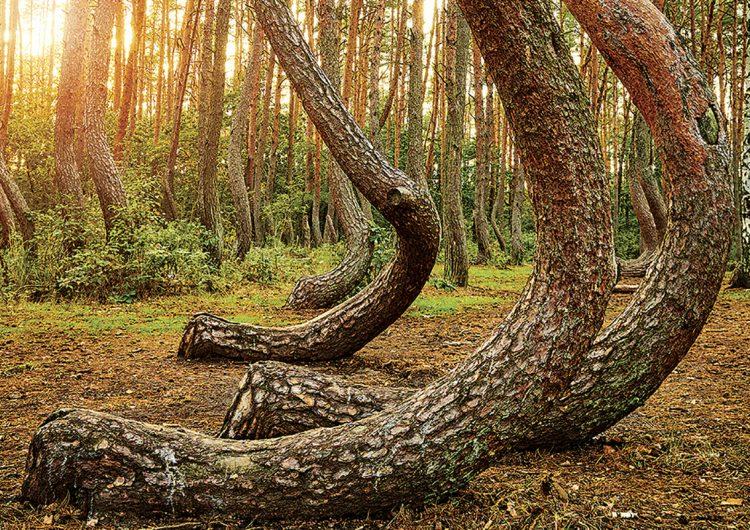 Fenómenos naturales de otro mundo que no te puedes perder