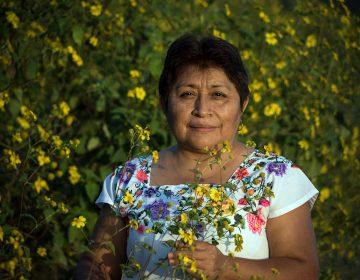 La indígena maya Leydy Pech gana el Premio Medioambiental Goldman