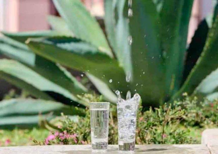 Tequila Don Ramón mantiene propuesta de instalarse en Puebla