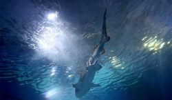 En 2020, Australia suma ocho muertes por ataque de tiburón;…