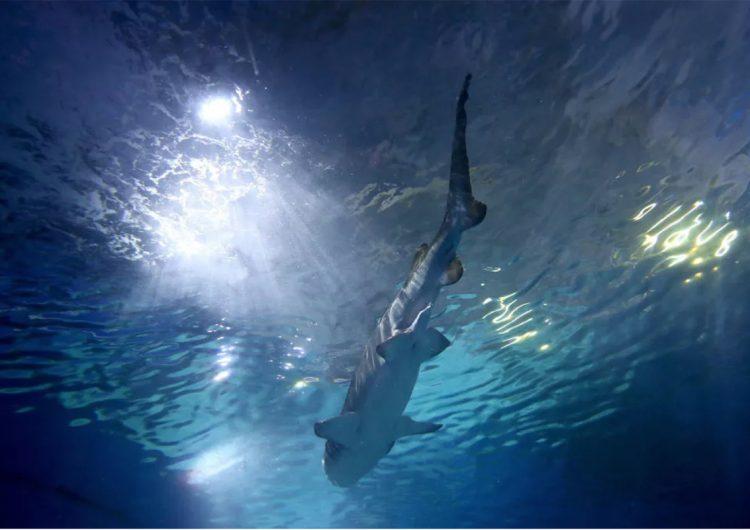 En 2020, Australia suma ocho muertes por ataque de tiburón; desde 1929 no llegaba a esa cifra
