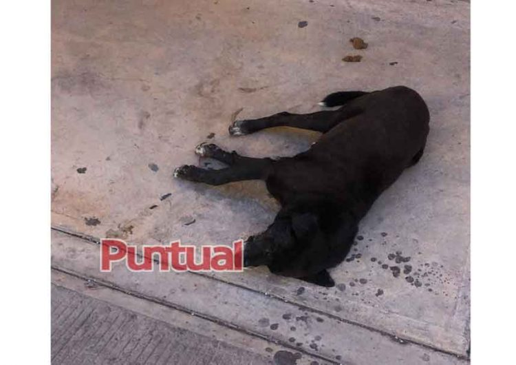 Triste, envenenan a perros en Huejotzingo