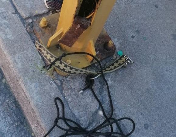 Detienen a hombre por asfixiar a un perro en calles de Aguascalientes