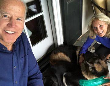 """La Casa Blanca tendrá """"Primeros Perros"""": estos son Champ y Major, las mascotas de Joe Biden"""