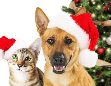 ¿El árbol de Navidad es tóxico para gatos y perros? Lo que debes saber para la seguridad de tu mascota
