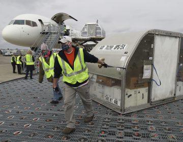 EU inicia campaña de vacunación; 20 aviones transportarán vacunas cada día