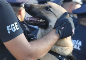 Se quedará en prisión sujeto que estranguló a un perro en Aguascalientes