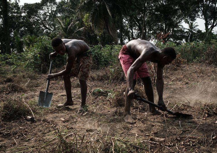 Epidemia de fiebre amarilla ya suma 172 víctimas mortales en Nigeria