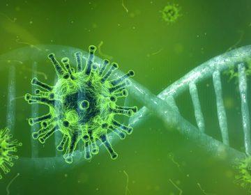 Alerta: OMS pide reforzar controles contra la nueva cepa de coronavirus