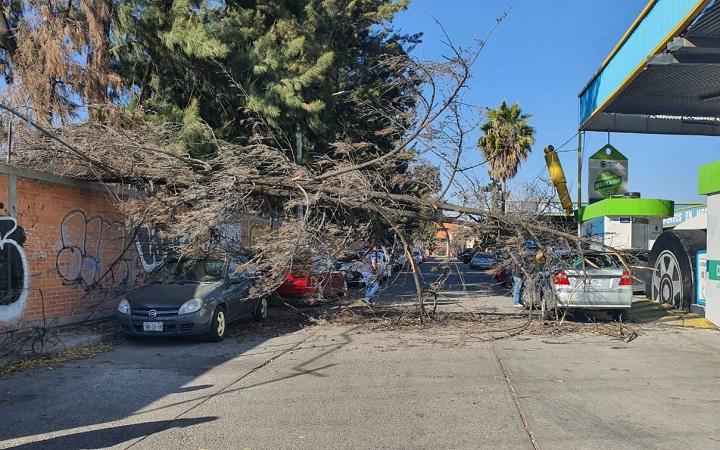 Cae árbol sobre automóviles en Fracc. San Cayetano