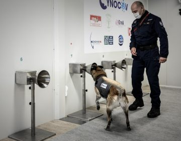 Francia usa perros para detectar el covid a través de la transpiración humana