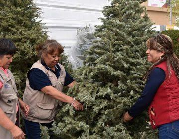 Inicia municipio de Aguascalientes campaña de acopio de árboles navideños naturales