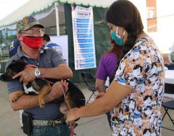 Ofrece el municipio de Aguascalientes vacuna antirrábica gratuita durante todo el 2021