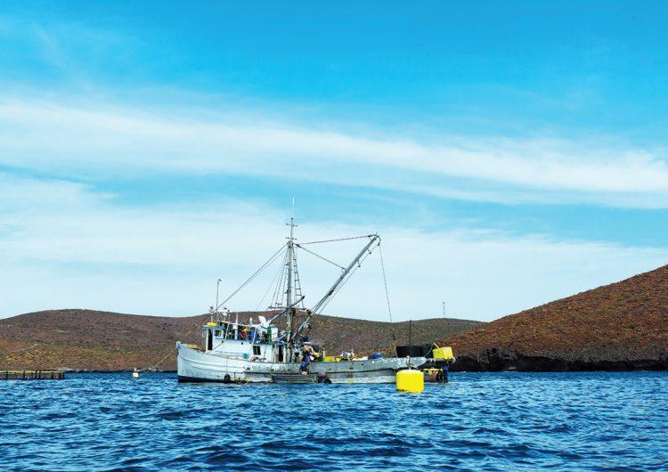 La nobleza del mar en las pesquerías sostenibles de México