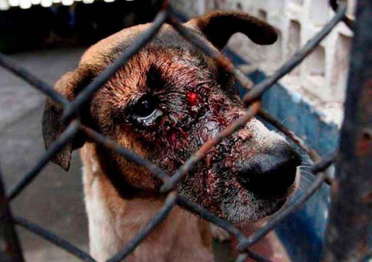 Puebla es segundo lugar en maltrato animal
