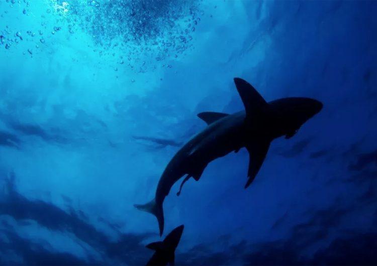 Muertes por ataque de tiburón aumentaron en 2020, pero los ataques disminuyeron