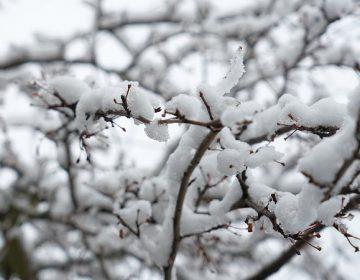 Se pronostican heladas en zonas altas de Aguascalientes este jueves