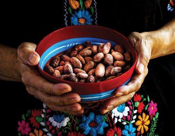 ¿Por qué el cacao mexicano está en crisis?
