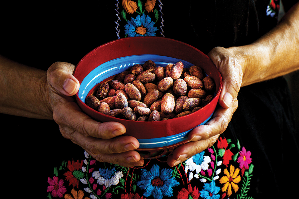 Por qué el cacao mexicano está en crisis?   Newsweek México