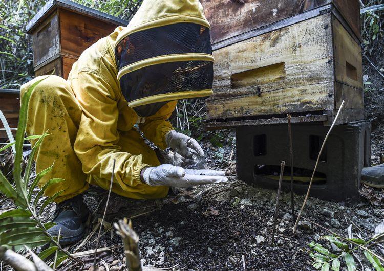 Abejas en Colombia están siendo aniquiladas por un agrotóxico vetado en Europa
