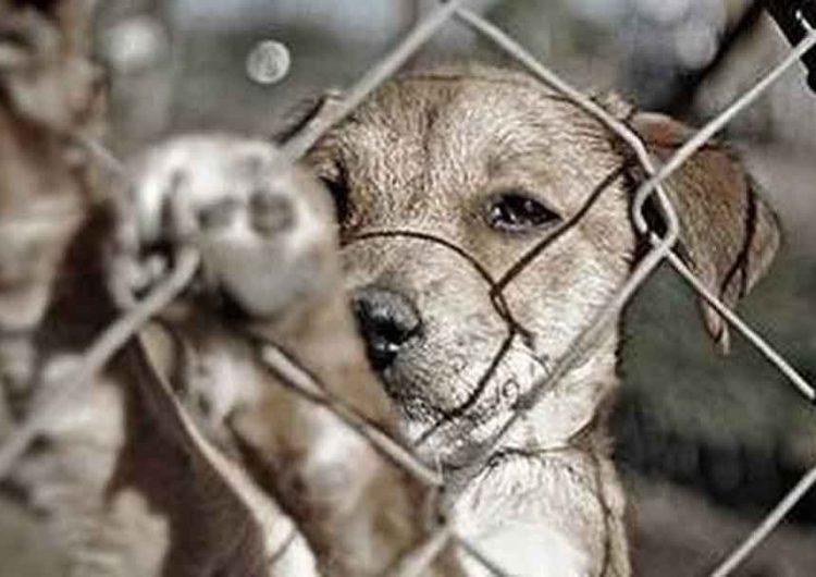 Disminuye el abandono pero aumenta maltrato a mascotas en Puebla
