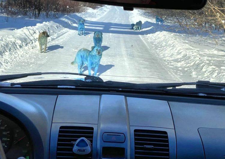 ¿Perros azules vagando cerca de una planta química abandonada? Esto es lo que sabemos