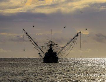 Pesca en México: rezagos y poco análisis de impacto a las especies marinas