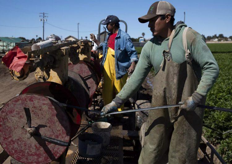 Por qué los trabajadores agrícolas indocumentados en EU deberían ser legales