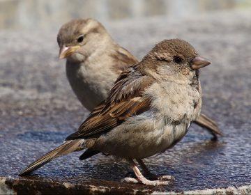 La contaminación acústica deteriora la inteligencia de los pájaros