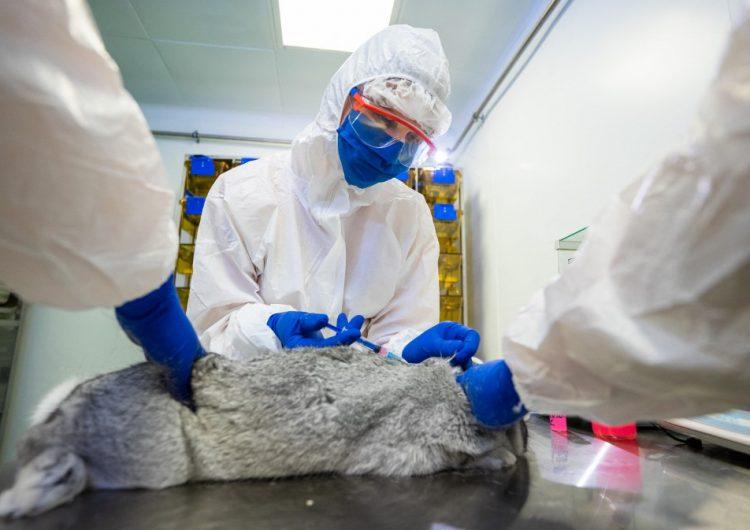 Rusia aprueba la primera vacuna contra el COVID-19 para animales
