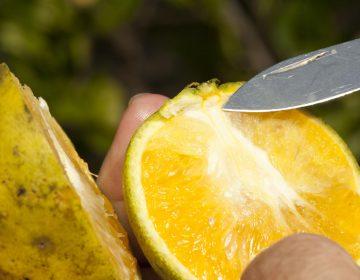 Inspectores de B.C. y EE. UU. combatirán plagas en las frutas de la región