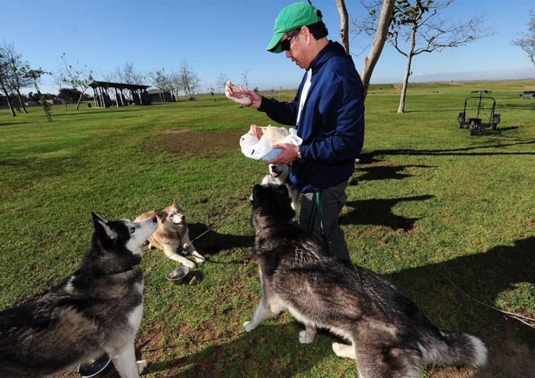 25 alimentos de humano que son mortales para los perros