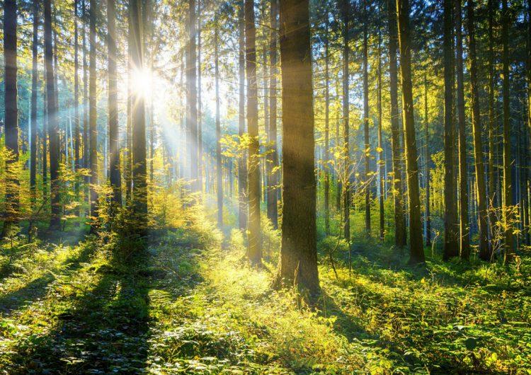 'Convierto a las personas en árboles'