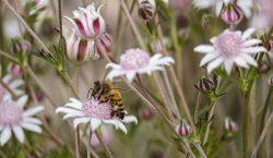 Picaduras de abejas causan más hospitalizaciones que ataques de serpientes y arañas