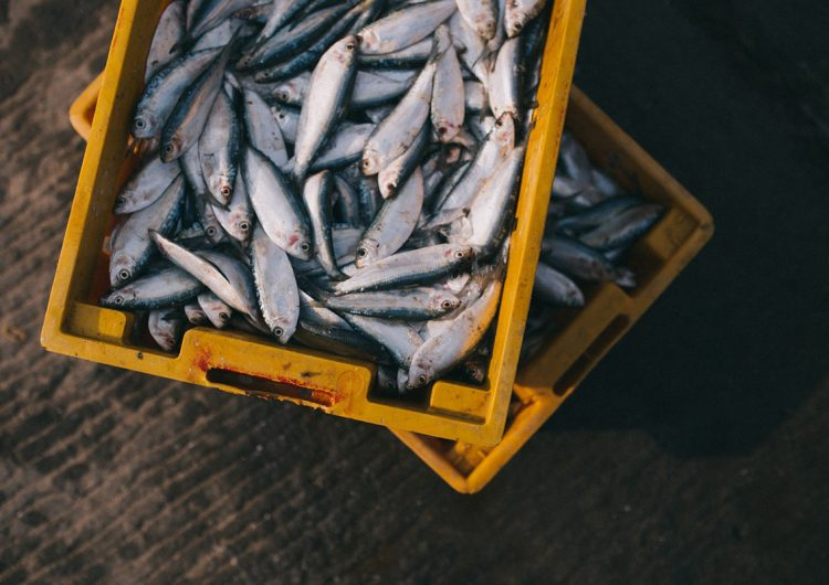 Adaptación y sostenibilidad, lecciones para el sector pesquero durante la pandemia