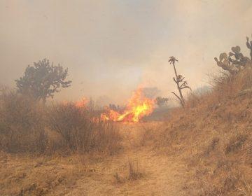 Incendios en Cobos podrían ser intencionales: guardabosques