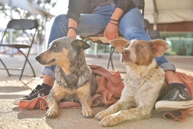 Con éxito se realiza jornada de esterilización de mascotas en Jesús María