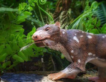 Descubren restos de nuevo mamífero de al menos 72 millones de años de antigüedad en Chile