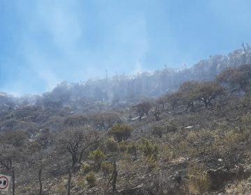 Sofocan incendio forestal en la comunidad La Congoja