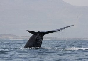 Pérdida de capacidad de los océanos de absorber el carbono puede agravar el cambio climático: Unesco