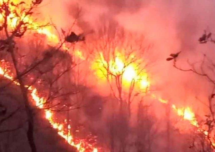 Incendio forestal en San Diego La Meza, Puebla cumplió cuatro días