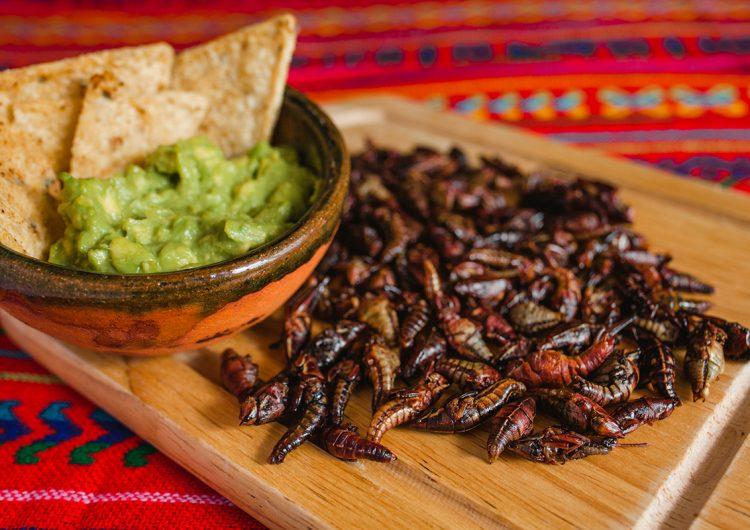 Insectos comestibles, los alimentos milenarios de la dieta mexicana