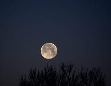 A qué hora podrá verse esta noche la Luna Rosa, la primera superluna de 2021