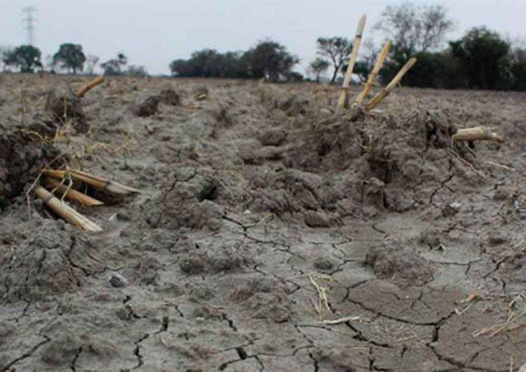 Sufren sequía 86 municipios en Puebla