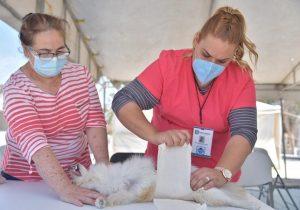 Realizan jornada de esterilización de mascotas en Jesús María