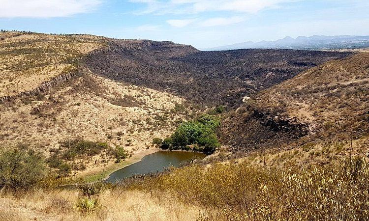 Más de 970 hectáreas forestales se han perdido por incendios en Aguascalientes